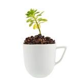 生长从杯子的绿色植物 免版税库存图片