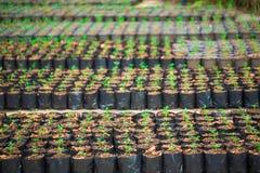 生长从种子,植物农场的绿色新芽 免版税库存照片