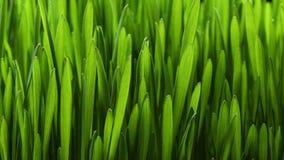 生长绿草植物4k 影视素材