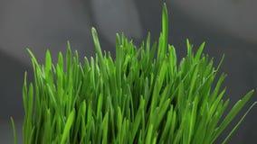 生长绿草 影视素材