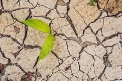 生长破裂的地球上的树 生长树救球 世界环境问题 剪切结构树 免版税库存图片