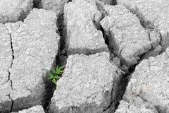 生长破裂的地球上的植物 免版税库存照片
