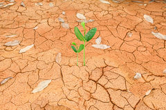 生长从破裂的地球的绿色新芽 免版税库存照片