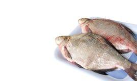 生鱼鲂 免版税库存图片