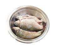 生鱼crucian在金属碗 免版税库存照片