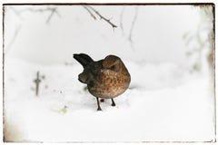 生活在冬天 图库摄影