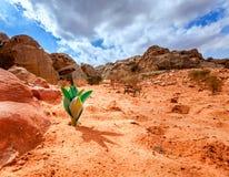 生活在沙漠 库存照片