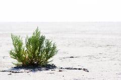 生活在沙漠 免版税图库摄影