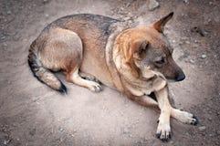 生活方式狗模型简单的生活动物 免版税库存图片