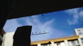 生活方式:从玻璃的美好的少妇清洁算术企业图表与蓝天,背景的摩天大楼 股票视频