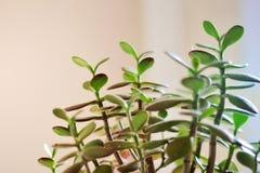 生活植物  免版税库存照片