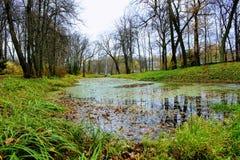用一个浮萍池塘盖在计数列夫・托尔斯泰庄园的公园在Yasnaya Polyana 免版税库存图片