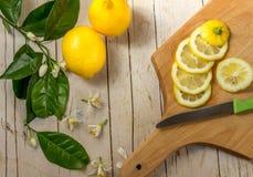 用一棵开花的树和切片柠檬装饰的柠檬 图库摄影