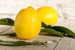 用一棵开花的树装饰的柠檬 免版税库存图片