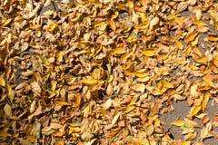 用下落的叶子从上面盖的边路 库存图片