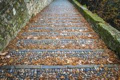 用下落的叶子报道的葡萄酒石步 免版税图库摄影