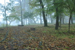 用下落的叶子盖的直线路径在有雾的森林里 免版税库存照片