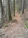 用下落的橡木被盖的道路离开 免版税库存照片