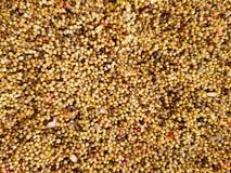 用不同的五颜六色的种子的鸟饵 与鸟饵的背景 库存图片