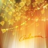 用不同的叶子的秋天背景 免版税库存照片