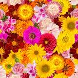 用不同的春天花的无缝的样式 与明亮的植物的背景 免版税库存图片