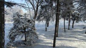 用不同的树的美丽的冬天公园 免版税图库摄影