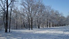 用不同的树的美丽的冬天公园 免版税库存照片