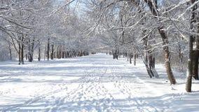 用不同的树的美丽的冬天公园 库存照片