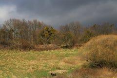 用不同的树的草甸在温和的德国冬天季节 不可思议的发光的光 免版税库存照片
