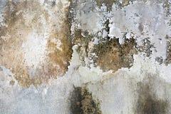 用不同的树荫的老白色墙壁 库存照片