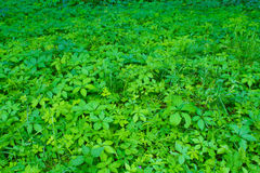 用不同的植物的森林沼地 库存图片