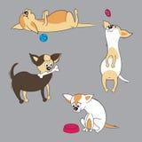 用不同的狗的汇集 免版税库存图片