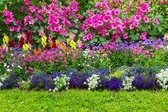 用不同的花的花床 库存照片