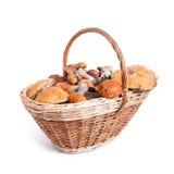 用不同的蘑菇的篮子从森林 免版税图库摄影