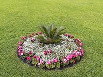 用不同的颜色的花圃在草坪中间 免版税图库摄影