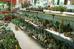 种植园房子 免版税库存照片