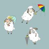 用不同的绵羊的汇集 库存照片