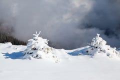 用丝网的雪盖的小蓬松冷杉木 云杉的树在雪被清扫的山草甸站立 库存图片