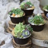 用乳脂状的多汁植物装饰的杯形蛋糕 库存照片