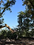 用于在森林以后发现树树桩和根去除了挖掘机 免版税库存照片
