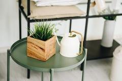 用于室内装饰的现代盆的常青人为植物 在喷壶旁边的盆的假植物在咖啡桌上 图库摄影