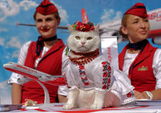 用于AtlasGlobal的促进的猫 免版税库存照片