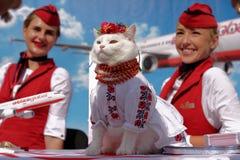 用于AtlasGlobal的促进的猫 免版税图库摄影