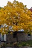 用五颜六色的叶子盖的树,秋天进来魁北克 免版税库存图片