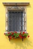 用五颜六色的红色大竺葵花装饰的窗口 库存照片
