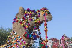 用五颜六色的缨子、项链和小珠装饰的骆驼的头 沙漠节日, Jaisalmer,印度 免版税库存照片