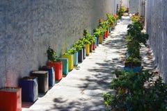 用五颜六色的罐的植物装饰的街道在米科诺斯岛, Gree 免版税库存图片