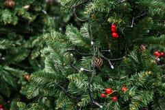 用光、锥体和红色莓果装饰的绿色树 免版税库存照片