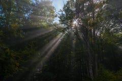 用光束击穿的森林 图库摄影
