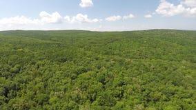 用具球果森林盖的山鸟瞰图  免版税库存图片